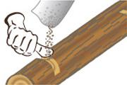 Holz beimpfen