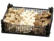 Bio Frischpilze Mischpackung 2: Shii-Take, Kräuterseitling, Weißer Buchenpilz