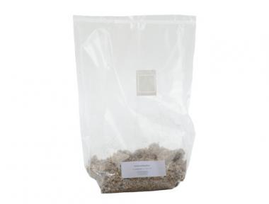 Weißer Buchenpilz Brut 0,6 kg Kleinpackung