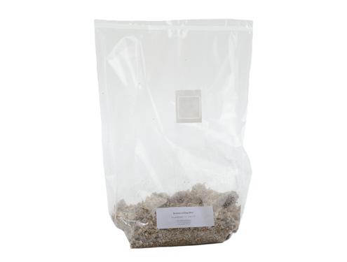 Austernpilz Brut 0,6 kg Kleinpackung